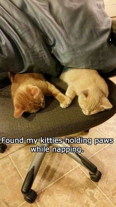 Kittens found holding paws while napping ... squee!!