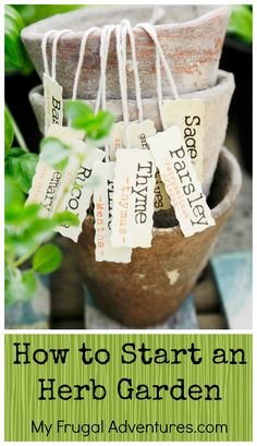 Start an Herb Garden Beginners Guide to Start an Herb Garden