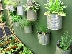 Creative aluminum can garden via Harmonic Mama.    I'm not sure about how this would look long term, as water rusts out aluminum cans so easily, but you could easily recreate this hanging can herb garden with other types of jars or pots.