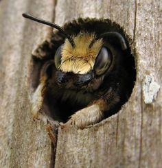 Bee image by Nigel Jones