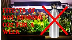 Effects Of Not Running Co2 For 1 Week In My Planted Aquarium