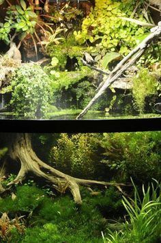Best Aquascaping Freshwater 112