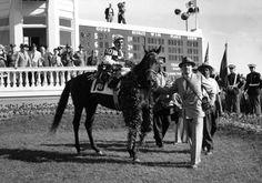 Dark Star- 1953 Winner of Kentucky Derby