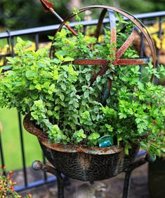 Herb container gardening The Graceful Gardener