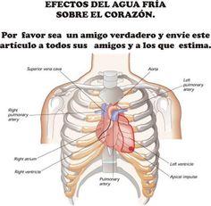 TU SALUD: Efectos Del Agua Fría Sobre El Corazón