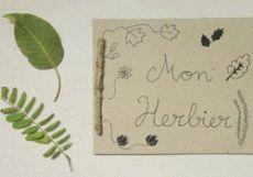 Bricolage Fabriquer un herbier