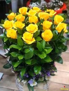 Rose Flower Pictures, Beautiful Flowers Photos, Wonderful Flowers, Beautiful Flowers Garden, Beautiful Roses, Good Morning Rose Images, Good Morning Beautiful Gif, Beautiful Good Night Images, Good Morning Roses