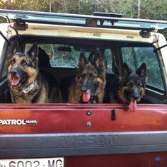 Patrol 260 2800cc