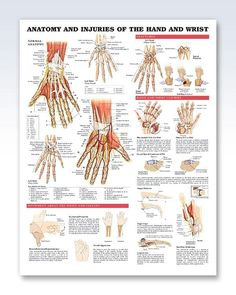 Injuries of the Hand and Wrist anatomy poster