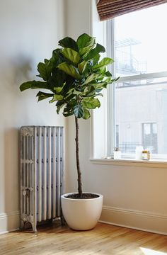 Add Some Zen To Your Space With These No-Fuss Houseplants - mindbodygreen.com
