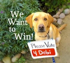 please vote for Debi to get featured on Youtube's home page!