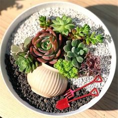 The cute succulents are the best choice to decorate your home.We have collected 45 cute successful plants ideas for you to decorate your home.Hopefully, these succulents will put you in a good mood every day. Succulent Bowls, Succulent Display, Succulent Gardening, Garden Terrarium, Succulent Arrangements, Succulent Terrarium, Container Gardening, Pallet Gardening, Succulents In Containers