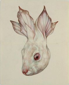 Butterfly Rabbit by Marco Mazzoni