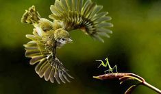 Amazing and funny pictures and videos from around the world: funny animals, beautiful nature scenery, universe etc, etc, etc. Pretty Birds, Love Birds, Beautiful Birds, Animals Beautiful, Animals And Pets, Funny Animals, Cute Animals, Wild Animals, Mantis Religiosa