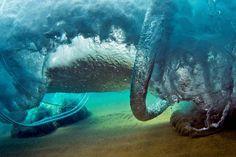 Love the underwater world.  #Shorebreak #power #underwater #world #ocean #water #aloha #hawaii #clarklittle