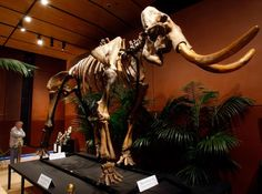 The Rise of the Ancient Beast: Harvard Team to De-extinct Woolly Mammoths in 2 Years
