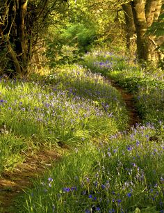 English woodland in springtime
