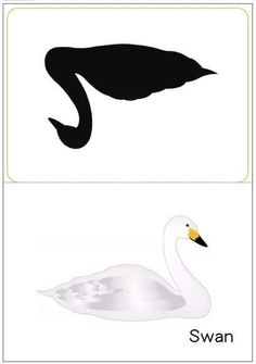 matching pictures to shadows worksheets Swan, Montessori, Worksheets, Printables, Homeschooling, Kid Stuff, Funny, Pictures, Activities