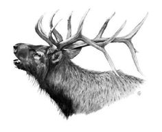 Image result for elk drawing Wildlife Paintings, Wildlife Art, Elk Drawing, Drawing Stuff, Elk Silhouette, Winter Drawings, Hunting Tattoos, Scratchboard Art, Forest Tattoos
