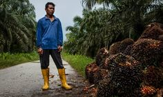 Palm oil: the secret in your shopping basket - have your say | Guardian Sustainable Business | The Guardian