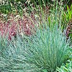 View All Photos | 12 great drought-tolerant plants | Sunset