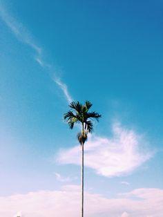 Pohon Kelapa. Bali - Indonesia Trees Tumblr, Instagram Frame Template, Sea And Ocean, Favorite Color, Serenity, Iphone Wallpaper, Panda, Bali, Travelling