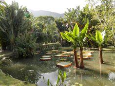 botanical gardens jardim botanico Rio de Janeiro Brazil Second Hand Susie Blog