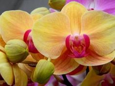 Orchid by Eva
