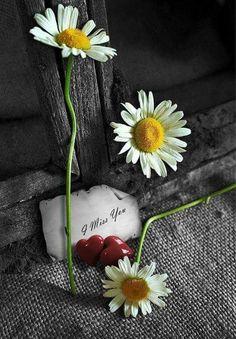 Missing u...