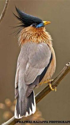 صباح الخير ياجماعة....مارئيكم بتسريحة شعري - #birds