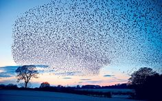 Somerset Levels: a winter wildlife spectacle - Telegraph.