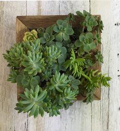 Small Vertical Garden