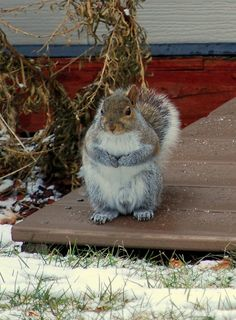 Welcome! I'm The Proprietor Here At Squirrel's  Nest Inn