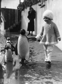 Just strollin' with some penguins in 1937…  --penguins are our family mascot because in penguin society, when a baby is separated from its birth parents for whatever reason, another will take him into his family and raise him as their own. <3  -Christi--