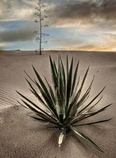 Detalles de Andalucía: dunas en la playa del Mónsul, en el Cabo de Gata (Almería) / Details of Andalucía: dunes on El Mónsul beach, in Cabo de Gata (Almería)