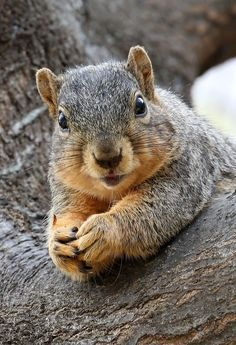Squirrel by Chris Newberry on 500px