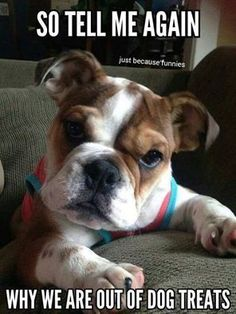 visit www.amazingdogtales.com for the best funny dog joke pics,inspirational dog stories and dog news.... Im sure it has nothing to do with me....