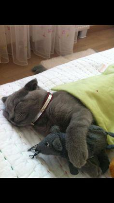Şşştt... Sleeping : )