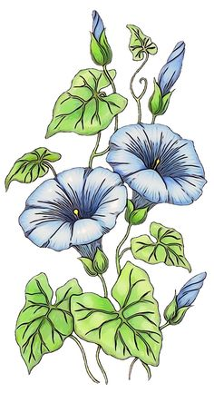 Hd Flowers, Long Stem Flowers, Botanical Flowers, Flowers Nature, Flower Png Images, Flower Pictures, Flowers Illustration, Design Digital, Design Floral
