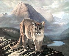 Cougar----by Charles Frace (This was one of his favorite works.)  Fantastic artist who has some great works of art featuring animals, birds...etc.