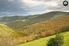 SAJA-BESAYA. Se encuentra entre las cuencas hidrográficas del Saja y el Besaya en la zona centro-occidental de Cantabria. Es el mayor espacio protegido de Cantabria, con importantes masas de hayedos y robledales. En él también crece el serbal y el enebro lastrero