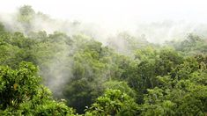 Rainforest sound 11 hours. Rainforest Reverie, natural sound of a rainfo...