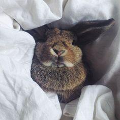 Bunny Tilvie enjoying her IN BED Store white linen