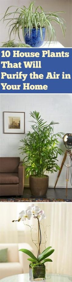 Air purfying plants, Air Cleaning Plants, Plants that Clean the Air, Plant Gardening, Air Freshening Plants, How to Naturally Freshen Your Home, How to Make Your Home Smell Good, Popular