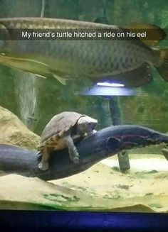 Made for unsolicited duck pics perfected for funny animals - Funny Duck - Funny Duck meme - - Made for unsolicited duck pics perfected for funny animals Funny Duck, Funny Animal Memes, Cute Funny Animals, Funny Cats, Funny Memes, Hilarious, Animal Quotes, Animal Humor, Top Funny