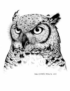 Some of my works created by myself using a combination of ink and technics from scientific illustrations learned in The Botanical Museum from the U. Easy Doodles Drawings, Pencil Art Drawings, Bird Drawings, Animal Drawings, Art Sketches, Realistic Owl Tattoo, Realistic Sketch, Hatch Drawing, Bear Drawing