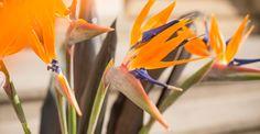 KW 2 langstielig: EXOTIC GIANT   4 Strelitzien und 5 Palmenblätter für Ihre Bodenvase   BLOOMY DAYS
