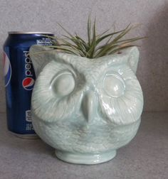 Celadon Gloss Glazed Owl head ceramic  planter by SueSueSueCrafts