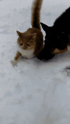 Gif para facebook: Ya probaste la nieve!!!!