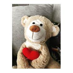 #molly #mollybear follow on instagram => @mollybeartr